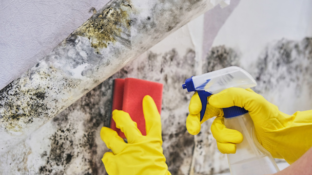 Signs that Mold is Making Its Way Into Your Home Through Your Roof